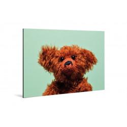 Kleine Freunde - Print on aluminum - 20x30 cm - Eric