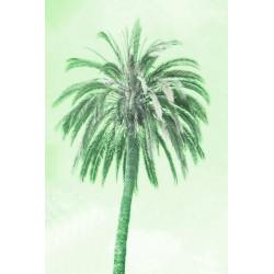 Amelie von Oppen - Print on Canvas - 13 Palms - Palm I