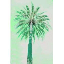Amelie von Oppen - Print on Canvas - 13 Palms - Palm II