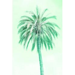 Amelie von Oppen - Druck auf Canvas - 13 Palms - Palm IV