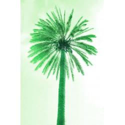 Amelie von Oppen - Druck auf Canvas - 13 Palms - Palm V