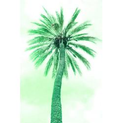 Amelie von Oppen - Druck auf Canvas - 13 Palms - Palm VI