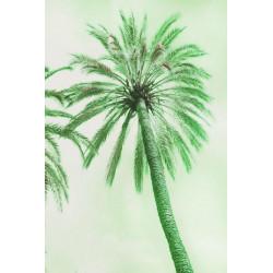 Amelie von Oppen - Print on Canvas - 13 Palms - Palm VII