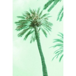 Amelie von Oppen - Druck auf Canvas - 13 Palms - Palm VIII