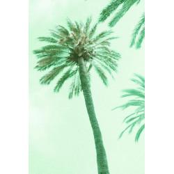 Amelie von Oppen - Print on Canvas - 13 Palms - Palm VIII