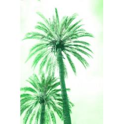 Amelie von Oppen - Druck auf Canvas - 13 Palms - Palm XII