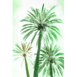Amelie von Oppen - Druck auf Canvas - 13 Palms - Palm XIII