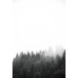 Studio Na.hili - Druck auf Aludibond - Walk Through The Forest