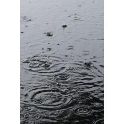 Studio Na.hili - Druck auf Aludibond - Summer Rain