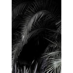 Studio Na.hili - Druck auf Aludibond - Tropical Garden