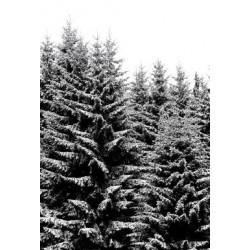 Studio Na.hili - Print on Aludibond - Snowy Christmas