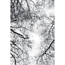 Studio Na.hili - Druck auf Aludibond - Reaching Into The Sky