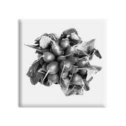designersgroup - dg-selection Magnet Stilleben Gemüse:  Radieschen