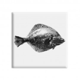 designersgroup - dg-selection Magnet Stilleben Fisch:  Scholle