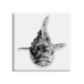 designersgroup - dg-selection Magnet Stilleben Fisch:  Snapper