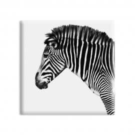 designersgroup - dg-selection Magnet Tiere:  Zebra