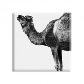 designersgroup - dg-selection Magnet Tiere:  Kamel