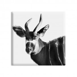 designersgroup - dg-selection Magnet Tiere:  Kudu