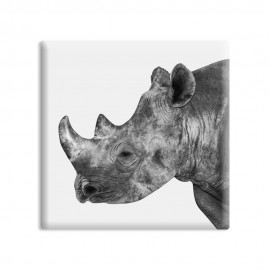 designersgroup - dg-selection Magnet Tiere:  Rhinozeros